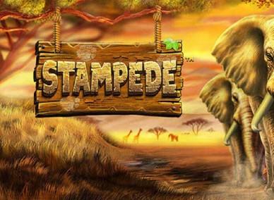 Stampede kaszinó játék